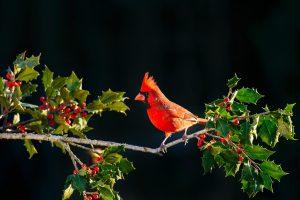 Birding and Bird Watching Holidays