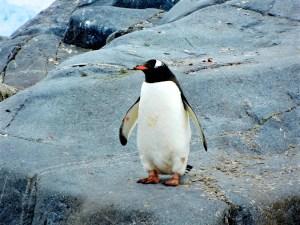 Adopt a Penguin Bird Watching Gift