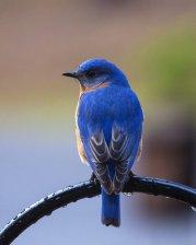 bird-2179663_1920