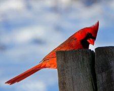 best cardinal feeder