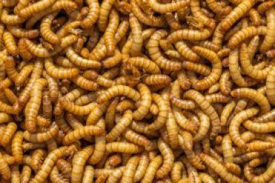 best mealworm feeder