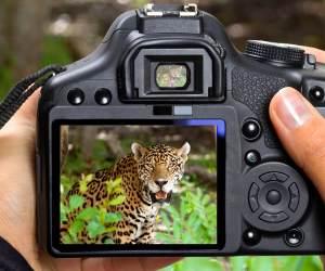 16 Best Lenses for Wildlife Photography (Nikon & Canon)