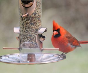 The 7 Types of Bird Feeders You NEED To Know About!