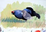 12 Szabocs Kokay - birdingmurcia
