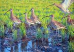 39 Szabocs Kokay - birdingmurcia
