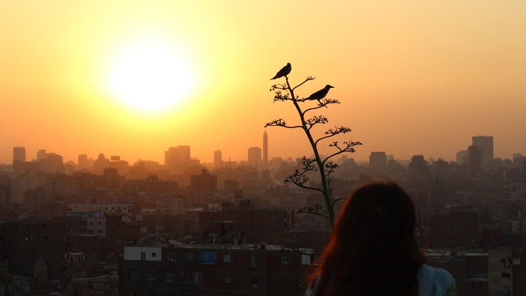 Best Weather for Bird Watching