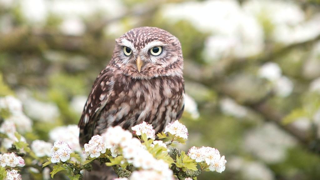 Rare Birds of the Pacific Northwest