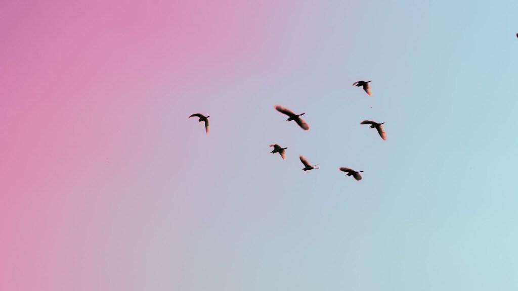 Bird Watching Slang