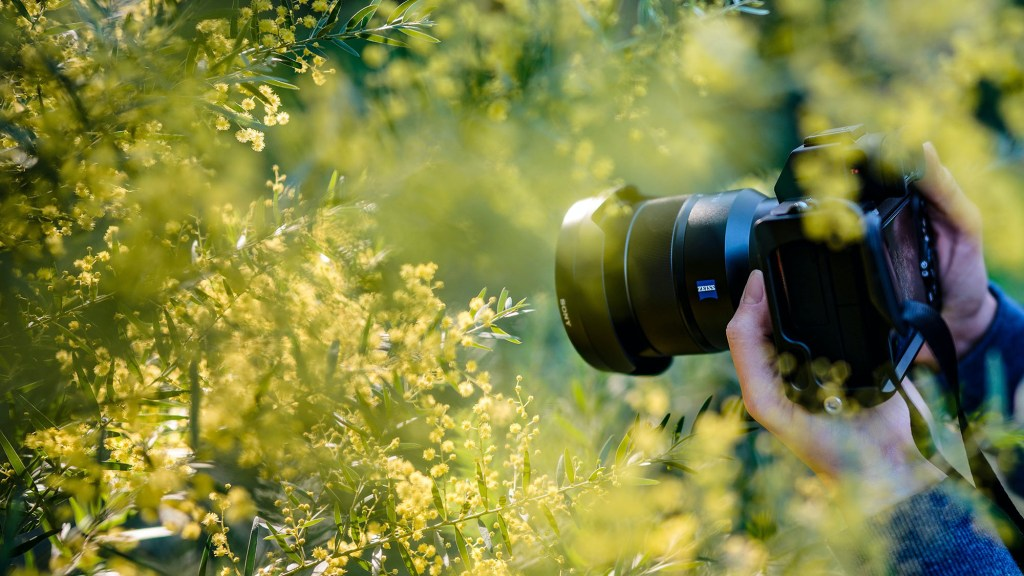 bird photography focusing tips