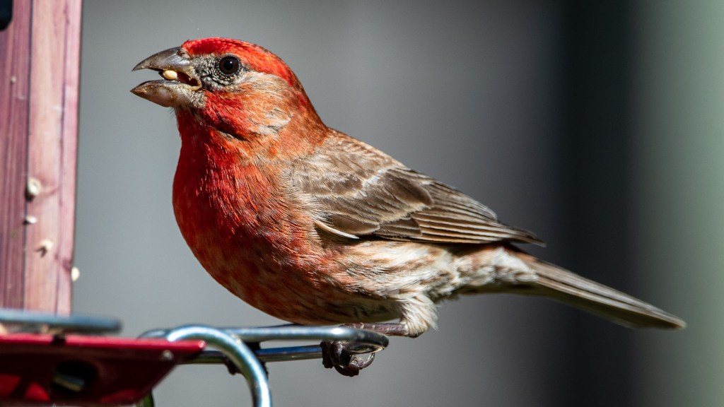 best bird seed for tube feeders