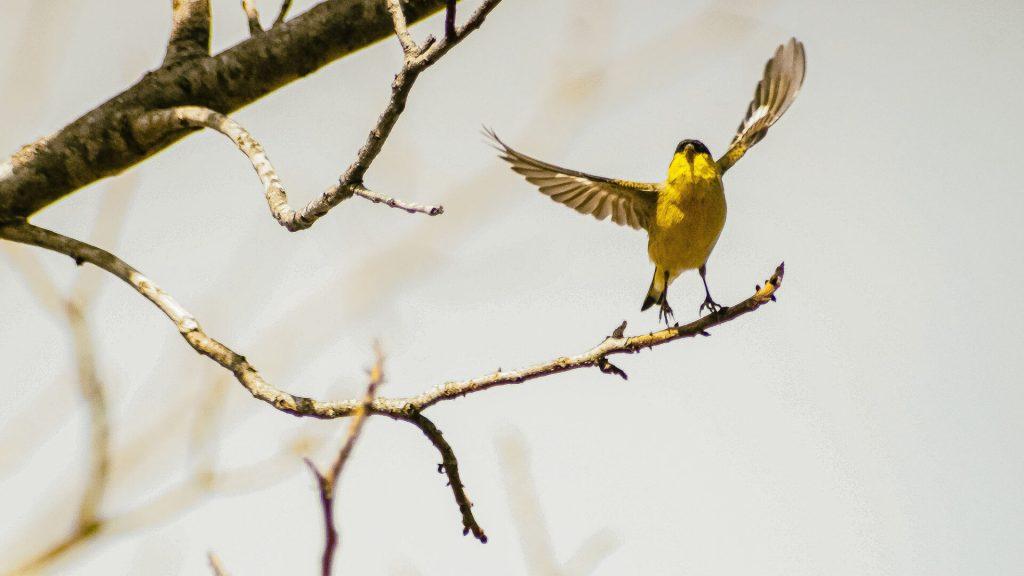 is vaseline harmful to birds