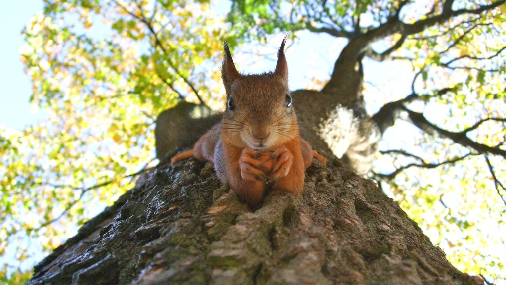 do squirrels eat mealworms