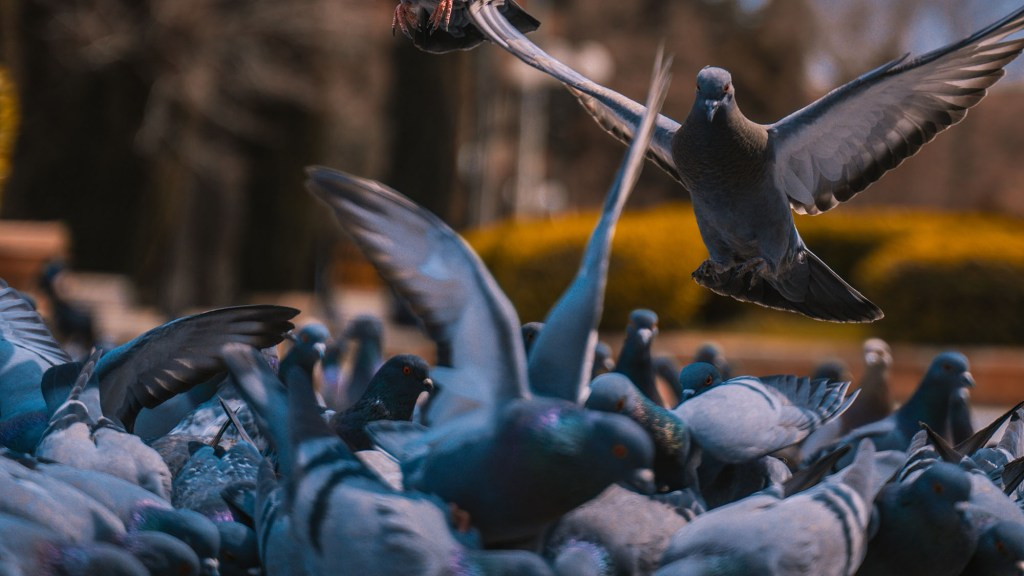 how to get rid of pigeons naturally