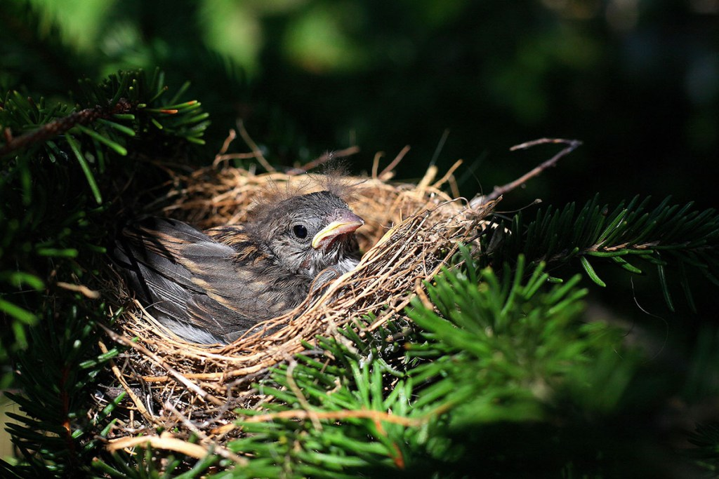 how to keep birds from nesting on outdoor speakers