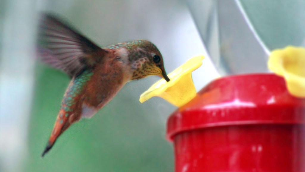 how to sterilize hummingbird feeders