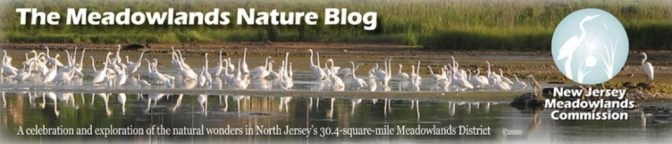 The Meadowlands Nature Blog