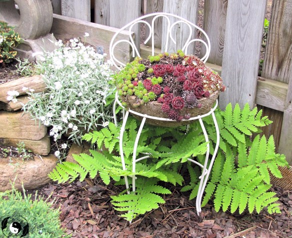 If you love embellishing your garden, you'll adore this hypertufa DIY planter! Learn how to create a succulent seat cushion with a hypertufa planter. Birdz of a Feather | hypertufa projects | hypertufa planters | hypertufa recipe | hypertufa projects ideas | garden ideas | garden accessories | garden decor | garden decor diy | garden decor ideas | succulents | succulents garden | succulents diy | hypertufa chair | upcycle | upcycle ideas #hypertufa #succulents #gardenindeas #gardendecor #birdzofafeather.ca #diymojo