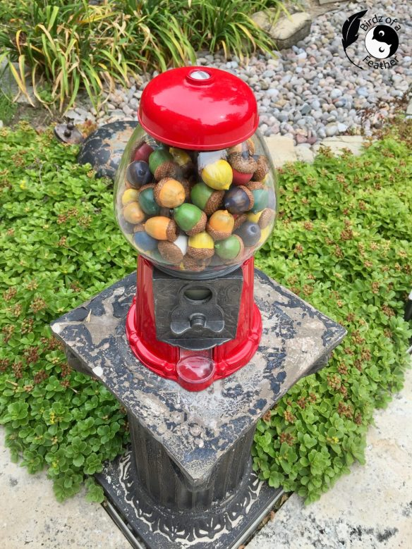 Acorns are so iconic so make the list of our Craft Ideas for Autumn. These colourful painted acorns are shown in an upcycled gumball machine!