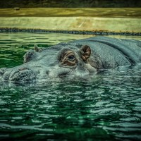 William S. Burroughs und Jack Kerouac: Und die Nilpferde kochten in ihren Becken