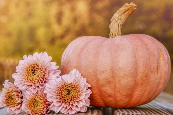 pumpkin-4452443_1280