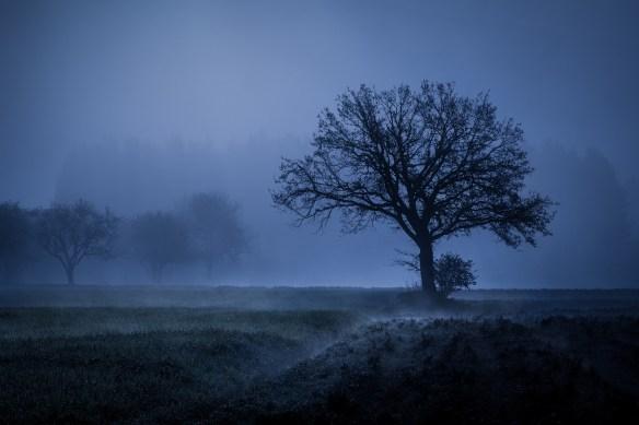 tree-2976739_1920