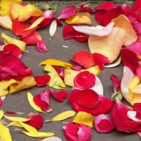 Fritz von Herzmanovsky-Orlando: Der Gaulschreck im Rosennetz
