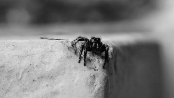 spider-3853480_1920