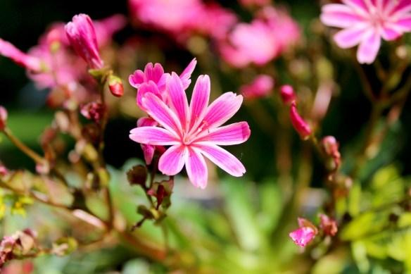 flower-4240440_1920