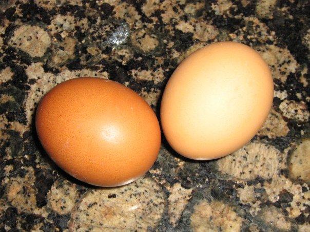 Ekologiska ägg från Kreta