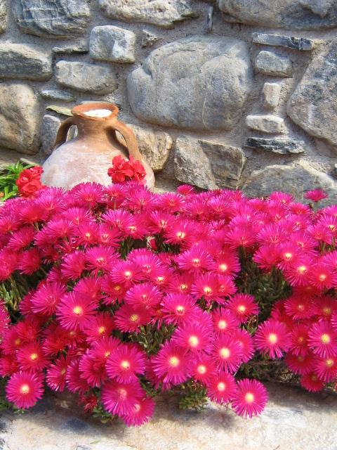 Vackra blommor finns det gott om på Kreta