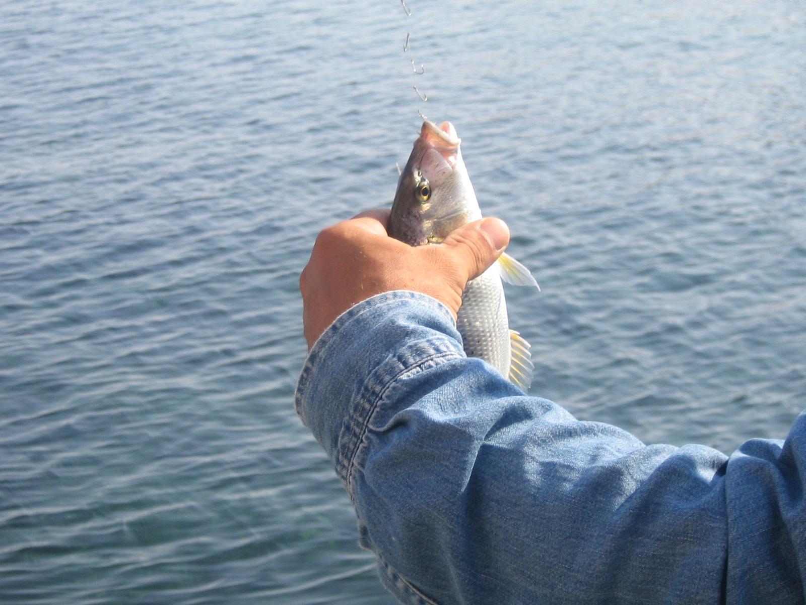 Fiskare med tur