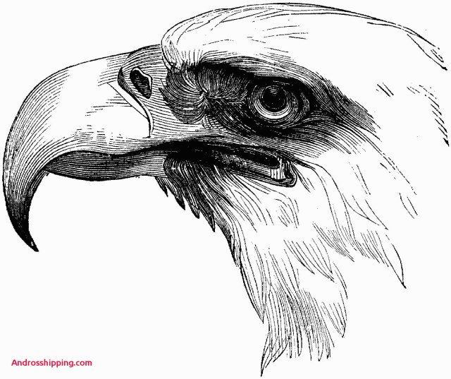 Bald Eagle Coloring Page 15 Lovely Bald Eagle Coloring Page Androsshipping