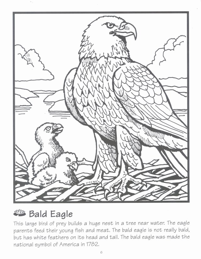 Bald Eagle Coloring Page Bald Eagle Coloring Page Inspirational Nfl Coloring Pages Ruva