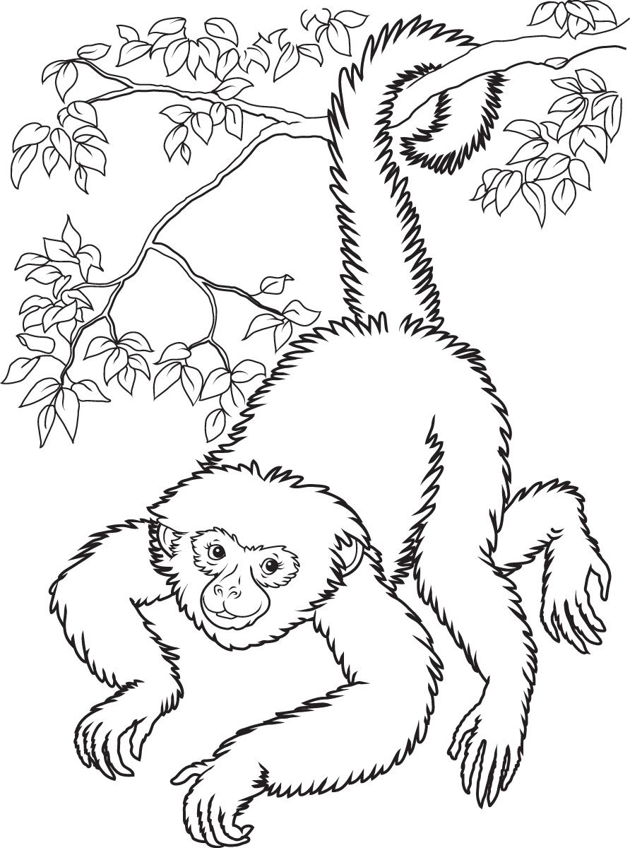 Monkey Coloring Pages Squirrel Monkey Coloring Pages Birijus Com