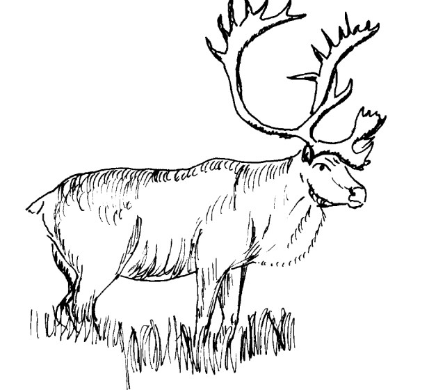 Moose Coloring Pages Printable Moose Coloring Pages Coloringme