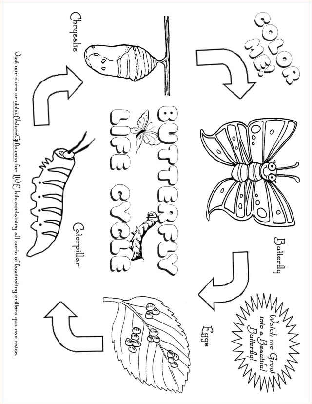 Pre K Coloring Pages Rainforest Butterfly Coloring Pages Save Rainforest Butterfly