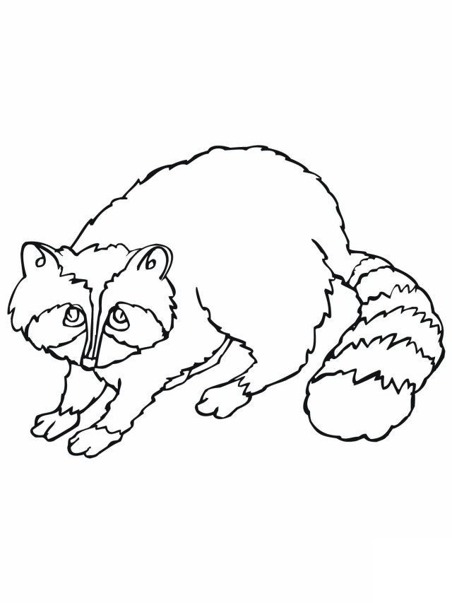 Raccoon Coloring Page Free Printable Raccoon Coloring Pages For Kids