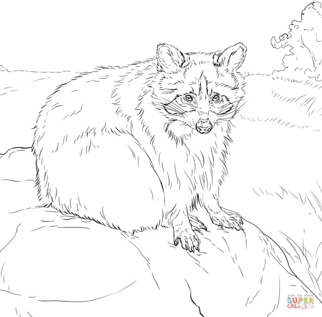 Raccoon Coloring Page Free Printable Raccoon Coloring Pages Manet