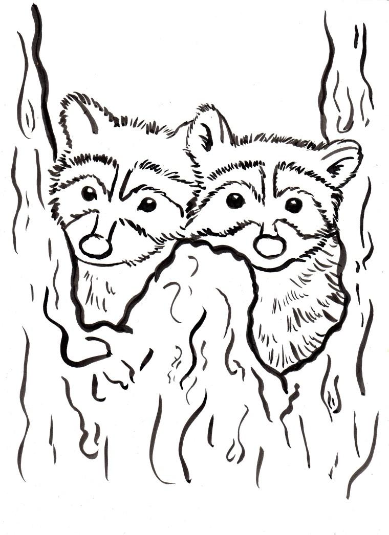 Raccoon Coloring Page Raccoon Coloring Page Samantha Bell