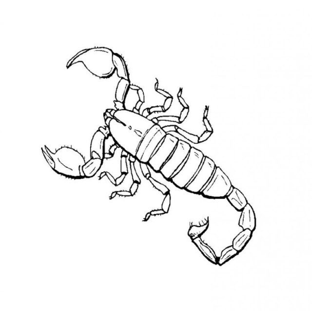 Scorpion Coloring Pages Anime Scorpion Coloring Pages Coloring Pages For All Ages