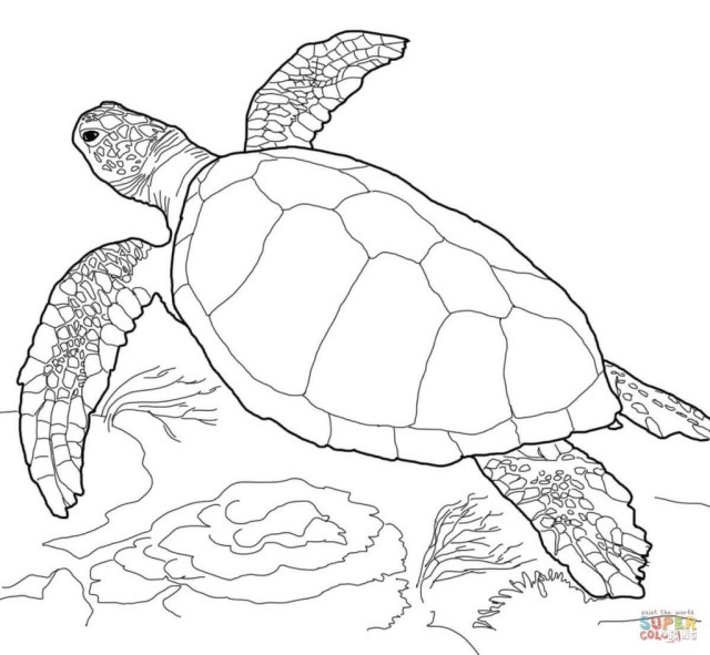 Sea Turtle Coloring Page Coloring Page Coloring Page Turtles Pages Free Incredible Turtle