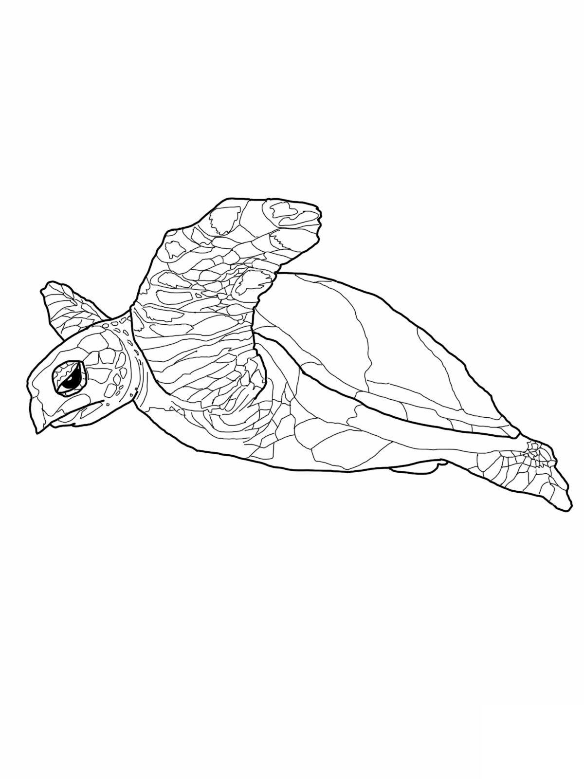 - Sea Turtle Coloring Page Free Printable Sea Turtle Coloring Pages