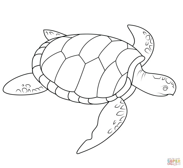 Sea Turtle Coloring Page Sea Turtle Coloring Page Free Printable Coloring Pages