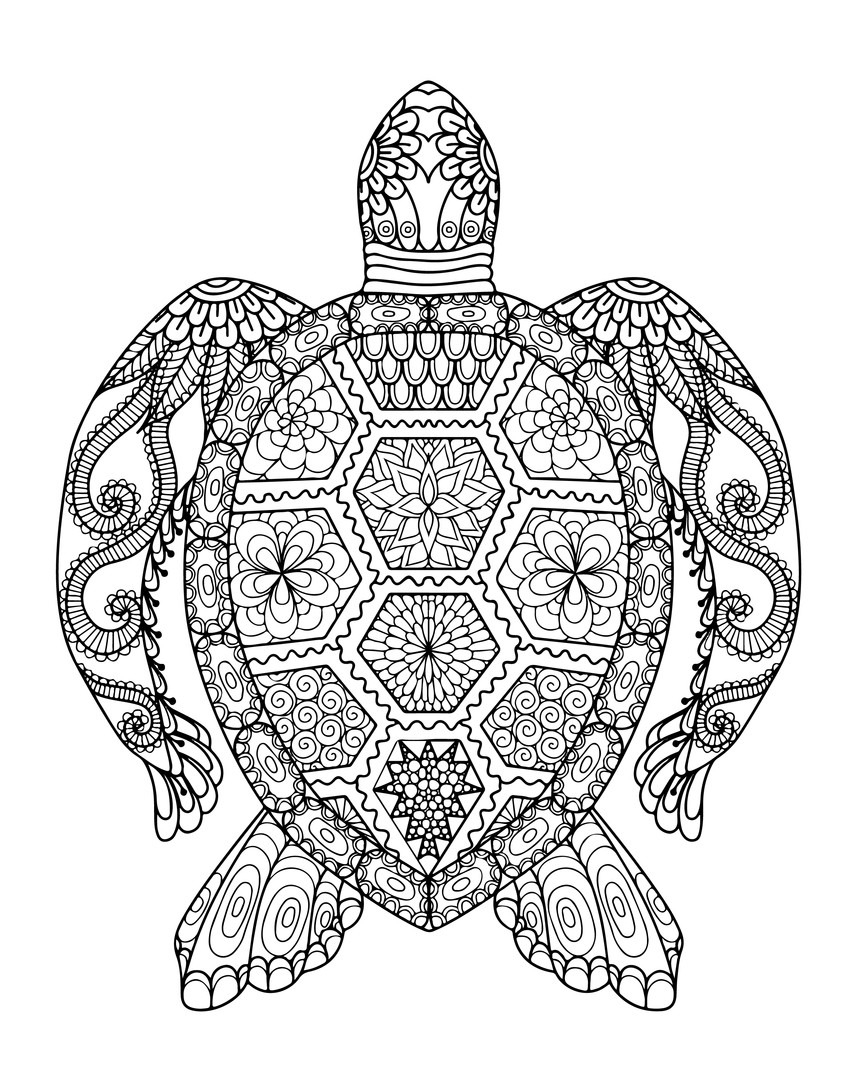 - Sea Turtle Coloring Page Sea Turtle Coloring Page Lovely Simple