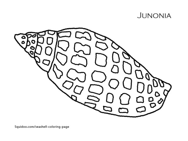 Seashell Coloring Pages 13 145 At Shell Coloring Pages Coloring Pages For Children