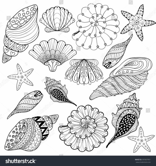 Seashell Coloring Pages Obsession Coloring Pages Of Seashells Vector Set Shells Zentangle