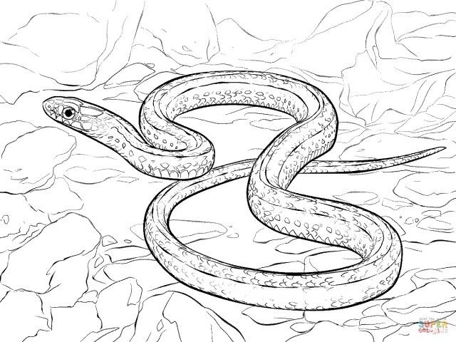Snake Coloring Pages Plains Garter Snake Coloring Page Free Printable Coloring Pages
