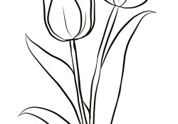 Tulip Coloring Pages Two Tulips Coloring Page Free Printable Coloring Pages