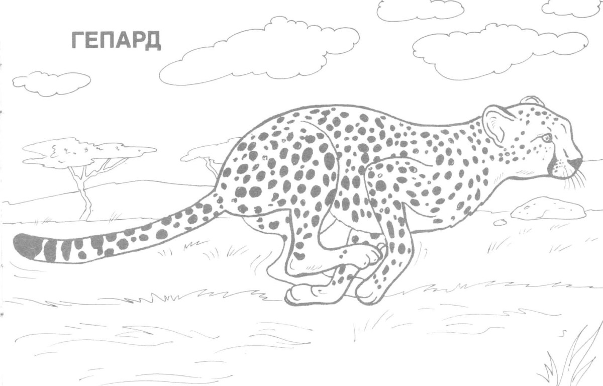 Adult Coloring Pages Animals - Best Coloring Pages For Kids | 768x1200