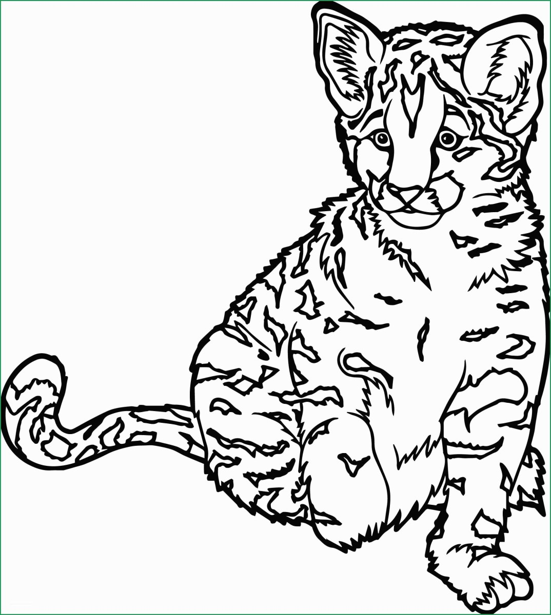 Wild Animal Coloring Pages Wild Animal Coloring Pages New ...
